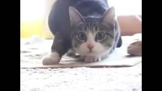 Кошка танцует трек