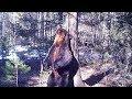 Brown bear 'dancing' against tree in Russian nature reserve