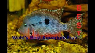 13 Best Freshwater Fish For Your Home Aquarium