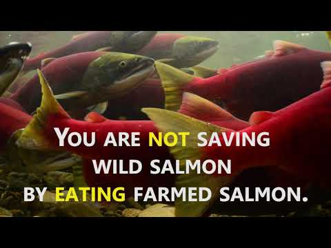 Farmed salmon?