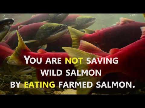 Farmed salmon?