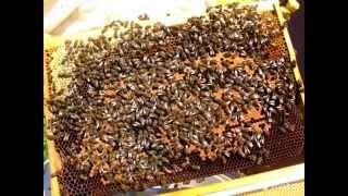 Пчелопакеты в Москве(, 2015-04-04T10:33:54.000Z)