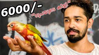 💥ഒരു തത്തയെ വാങ്ങി!! പൈസ കേട്ട് മമ്മി ഞെട്ടി | We Bought a New Exotic Bird | Pineapple Conure