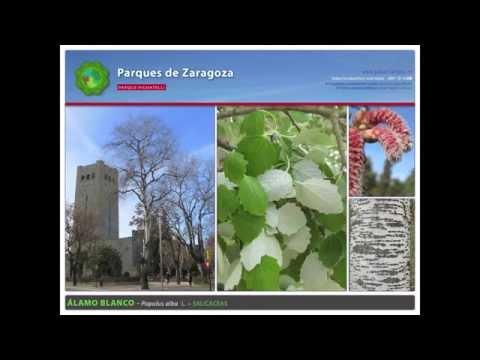 Parque Pignatelli - Especies ornamentales