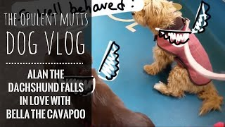 Dog Vlog: The One Where Alan The Dachshund Comes To Play