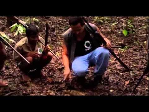 Don Quijote De La Selva (parte 4)