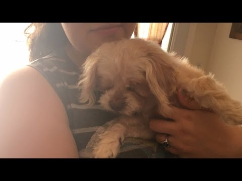 Woman Reunites With Dog Who Ran Away From Home 9 Years Ago