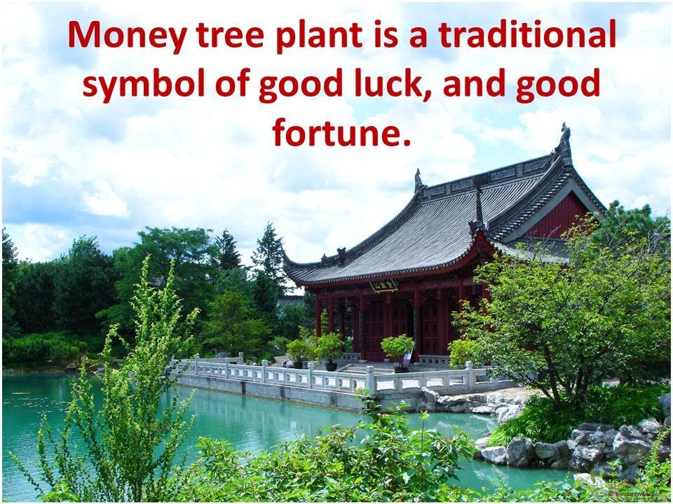 Money Tree Plant Is A Traditional Symbol Of Good Luck And Good