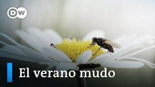 Muerte masiva de insectos | DW Documental
