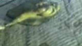 Strange Creature Found In Russian Lake