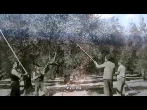 Butamarta布達馬爾它橄欖油家族史