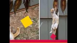 Коты воры
