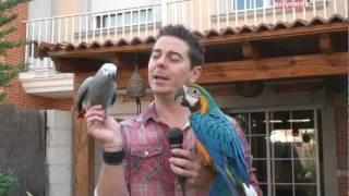 Javier Seoane, criador y adiestrador de loros thumbnail