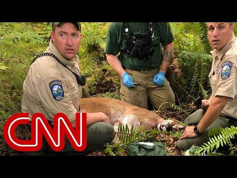 Cougar kills cyclist, mauls another in rare attack
