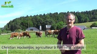 Le contrôle des rumex dans les pâturages (Christian Hockenjos)