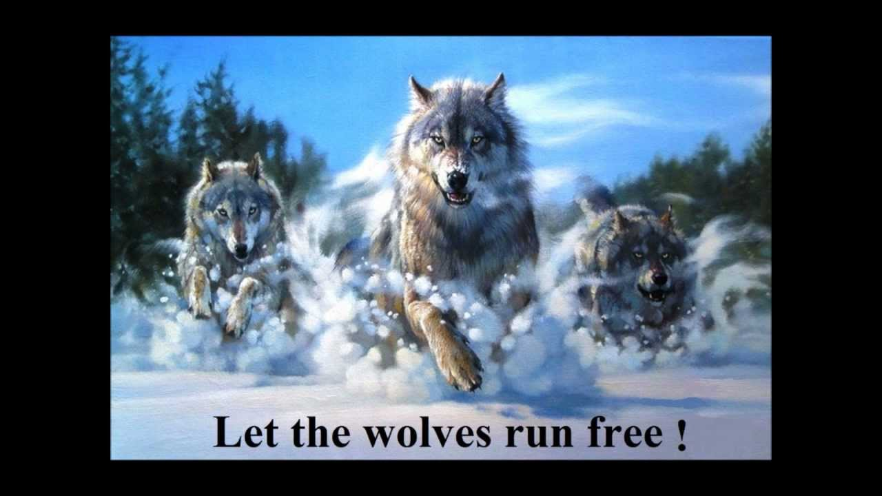 Let the wolves run fre...