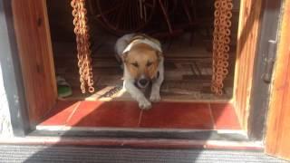 Собаку первый раз пустили в дом и он не хочет выходить....