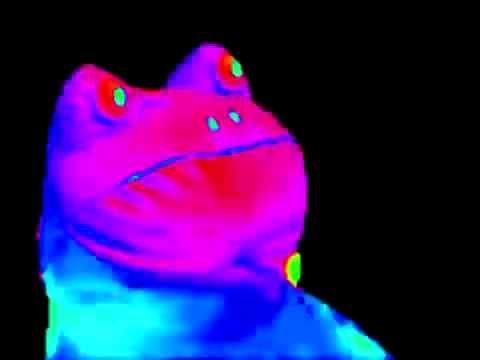 hqdefault mlg frog meme youtube