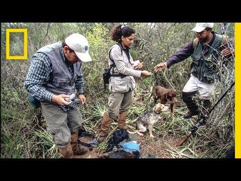 Erika Cuéllar: Hands-on Conservation | Nat Geo Live