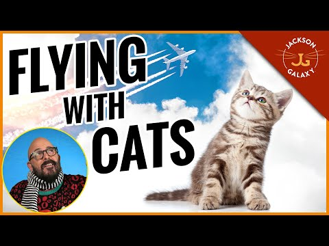 Jackson Galaxy's Tips for Flying with Cats