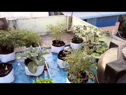 Make your own organic fertiliser for your terrace garde for Terrace vegetable garden ideas in tamil