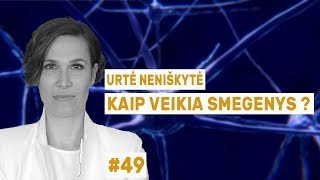 """Urtė Neniškytė - Kaip veikia smegenys?    """"Mokslo sriubos"""" podkastas #49"""