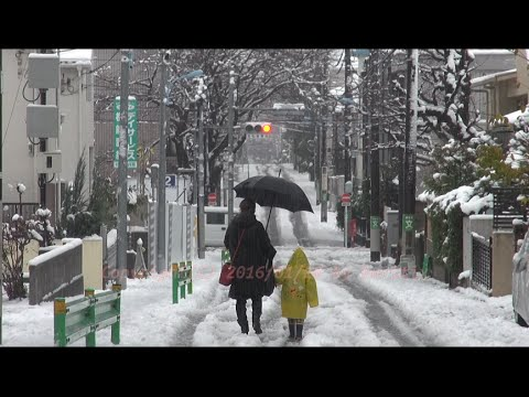 Japan Trip 2016 January 18 News today Tokyo has changed to rain from snow !!