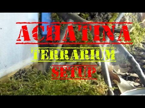 [Setup] Lissachatina fulica ( ślimak olbrzymi) - wystrój terrarium