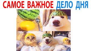 Лучшие Мемы Дня  Рамзан Кадыров подарил машину ребёнку