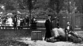 Vulgar Display of Power - A History of the Zoo