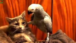 смешные попугаи 2