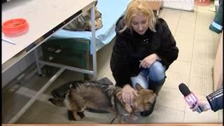 Службу по отлову собак заподозрили в продаже псов на...