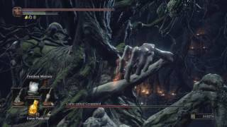 DS3 NG+6 Cursed Rotted Greatwood