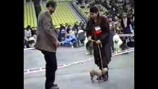 Выставка мексиканская голая собака (ксоло) 1996г..avi
