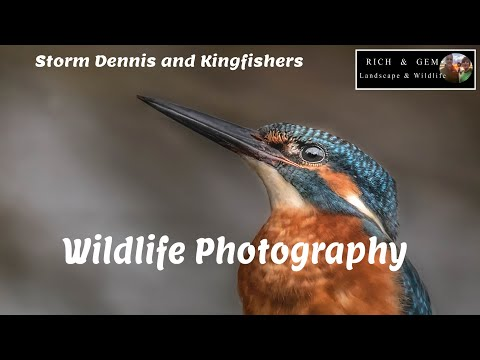 Kingfishers In Storm Dennis | Rich And Gem Wildlife Photography