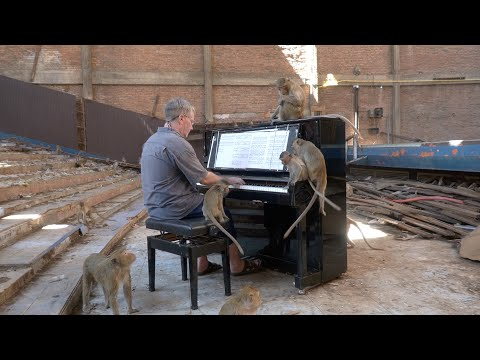 Musician Plays The Piano For Wild Monkeys In An Abandoned Theater