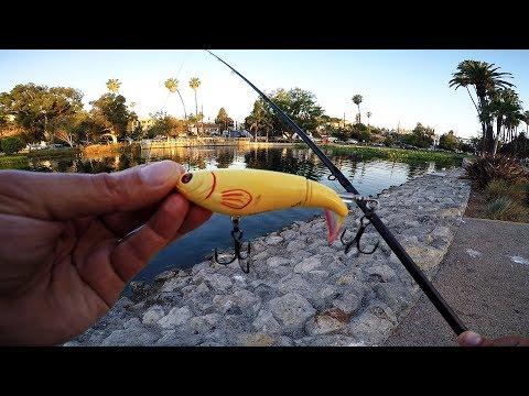 Echo Park Bass Fishing (Los Angeles) - First Whopper Plopper Fish !