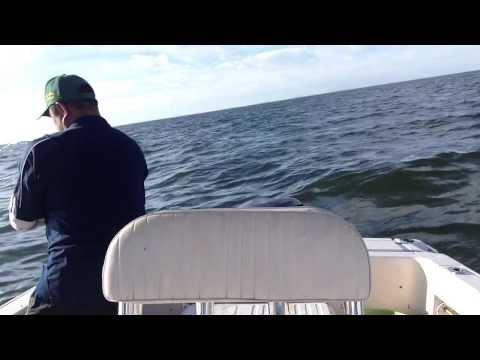 Bluefish Fishing 9/15/2013 at 15 miles offshore  NJ