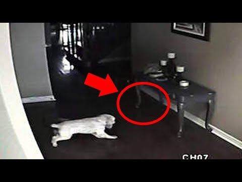 5 Dogs That Saw Something Their Owners Couldnt See : Ghosts, ESP, & Paranormal