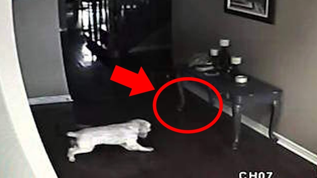5 Dogs That Saw Something Their Owners Couldn't See : Ghosts, ESP, & Paranormal
