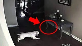 5 Dogs That Saw Something Their Owners Couldn't See Ghosts, ESP, & Paranormal