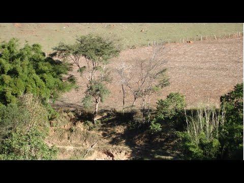 Restauração Florestal - Recuperação de Áreas Degradadas