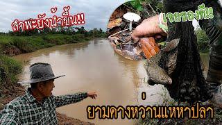 ยามดาง หว่านแหหาปลา ลำพะยังน้ำขึ้น!! พ่อน้อยออกหาปลาวันฝนตก บรรยากาศดีๆ หมานอยู่ครับพี่น้อง