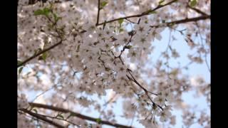 今井麻美3rdアルバム「Precious Sounds」全曲紹介MOVIE 2012年11月28日...