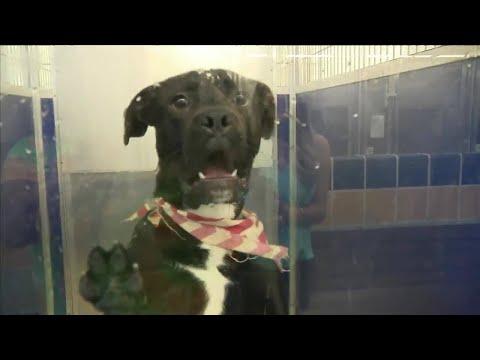 Miami-Dade Animal Services Over Capacity Following Hurricane Irma