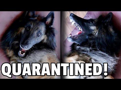 7 Days of Quarantine   Funny Dog Video