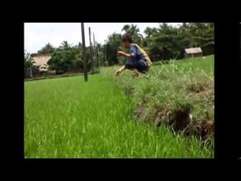 BAY CU GAY CANG LONG TRA VINH 01