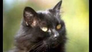 Freddie Spruell Tom Cat Blues (1928)