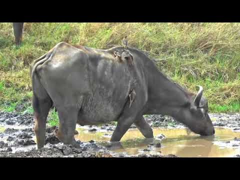 BURUNGE Wildlife Management Area Tanzania