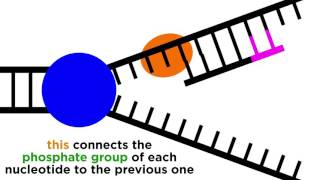 DNA replication initiation